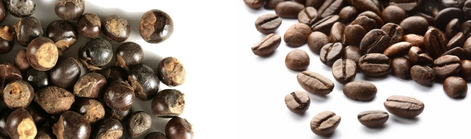 graines de guarana et de café