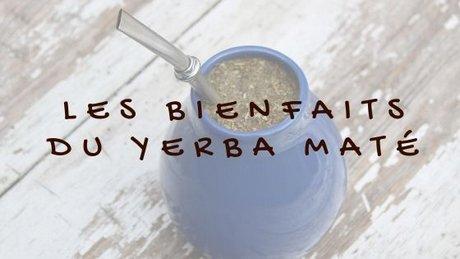 Yerba maté : ses bienfaits et ses vertus sur l'organisme